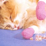 Declawing Cats Required to Rent?