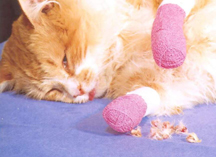 http://www.littlebigcat.com/wp-content/uploads/2010/11/declawed-cat-with-bandages-and-toes.jpg
