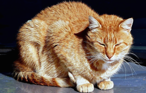 "A cat with a tummy ache may sit in the ""meatloaf"" position; squinty eyes are also a sign of pain."