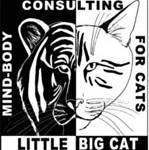 littlebigcat.com