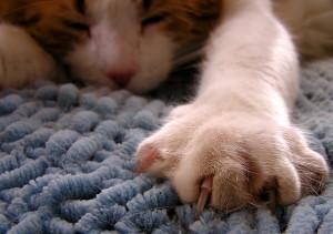 Sleeping cat by liz west