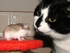 Cat and gerbil by Sodapop 2391