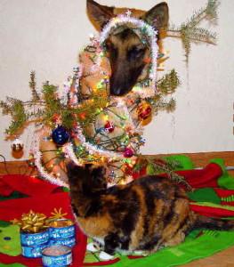 dog-tree-cat